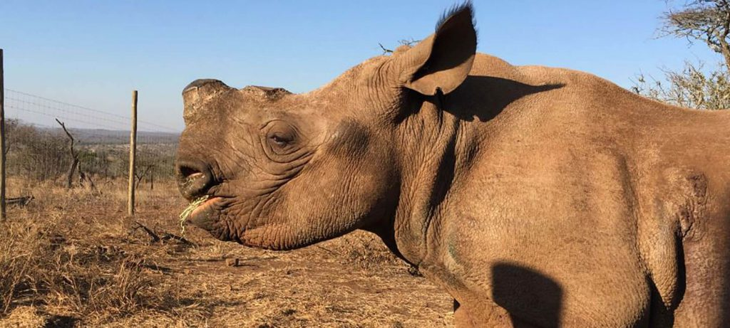 Container Accommodation Donation to Help Save The Rhinos